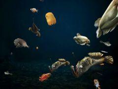 free iPhone app Tap Reef Deep Sea HD