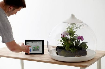 ipad-terrarium.jpg.492x0_q85_crop-smart.jpg